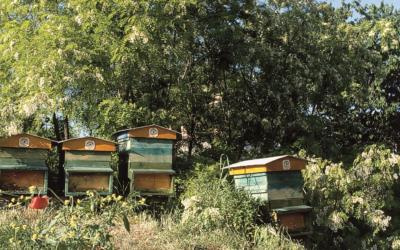 Raccolta del miele, come sta andando?