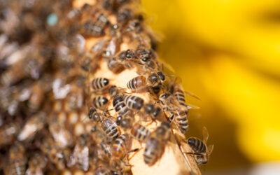 L'ape nella letteratura, da Omero a Virgilio