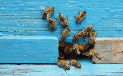 L'ape nella letteratura. Dante, Marx e la superiorità delle api