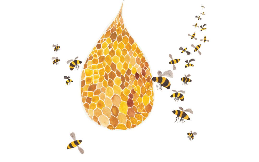 Tutti i numeri delle api e dell'alveare