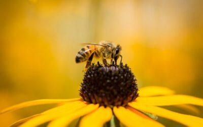 Elettricità e vibrazioni: ecco come i fiori seducono le api